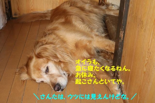 IMG_4599.jpg