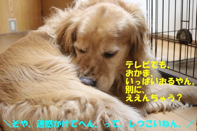 IMG_6503_201606172134196f7.jpg
