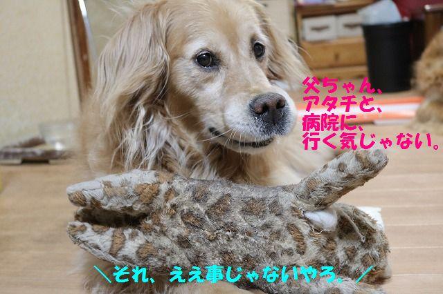 IMG_6548_2016061921083537f.jpg