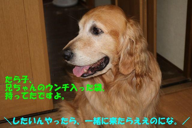 IMG_7638_2016062922114725b.jpg