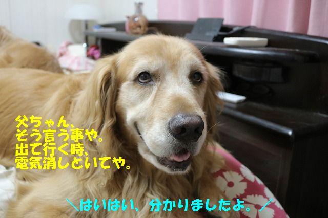 IMG_7681_201606292211592ce.jpg