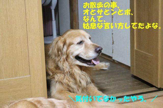 IMG_7784.jpg