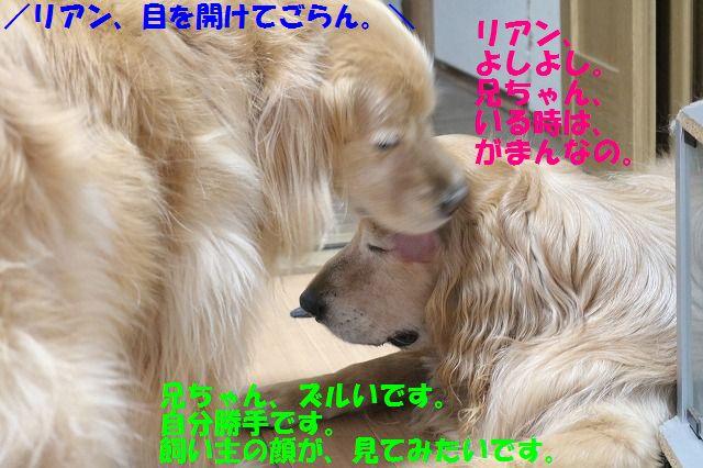 IMG_7857_201607032225535b7.jpg