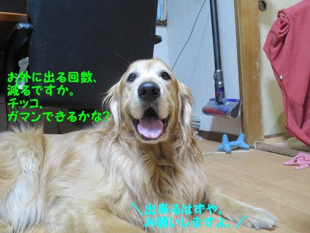 IMG_8017.jpg
