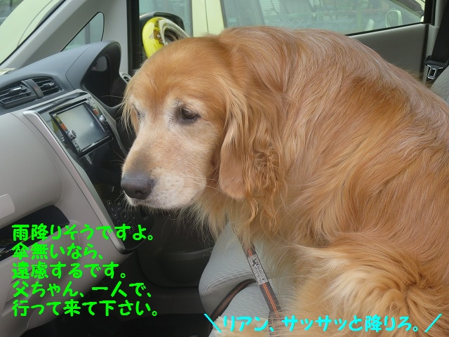 IMG_8368.jpg
