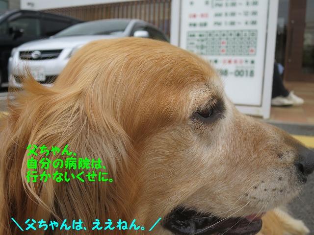 IMG_8375.jpg