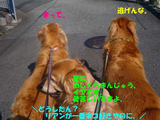 IMG_8525.jpg