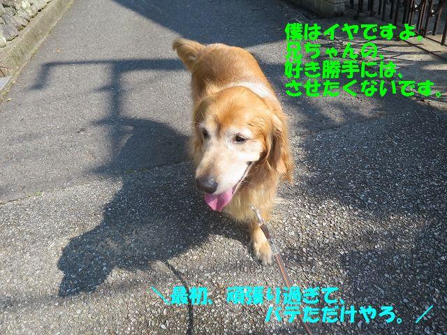 IMG_8528.jpg