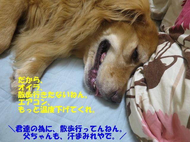 IMG_8750.jpg