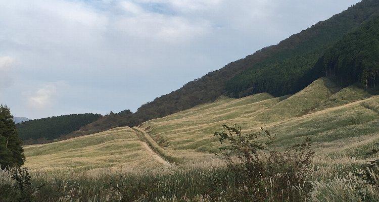 750×400今日の仙石原すすき草原 20181003