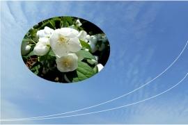 601花と空B