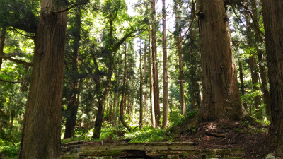 20160602_樹々