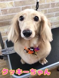 10月24日クッキーちゃん