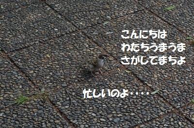 DSC_2796.jpg