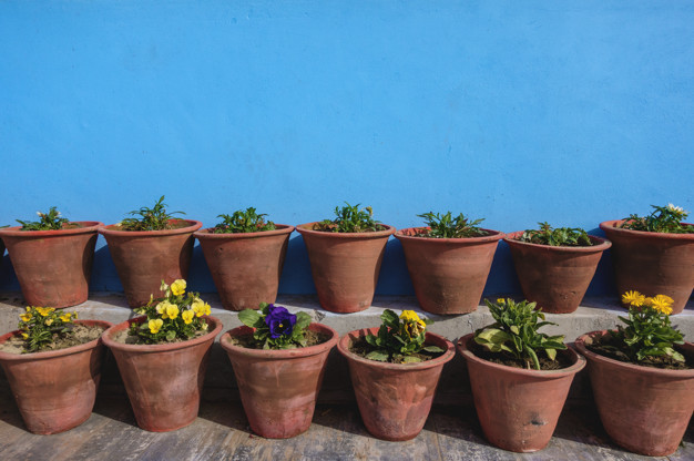 flower-pots-with-blue-wall_53876-33555.jpg