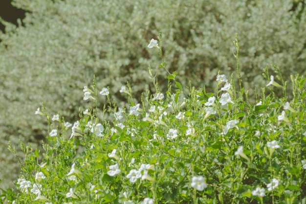 plants-dandelions-forest-flowers_36835-1183.jpg