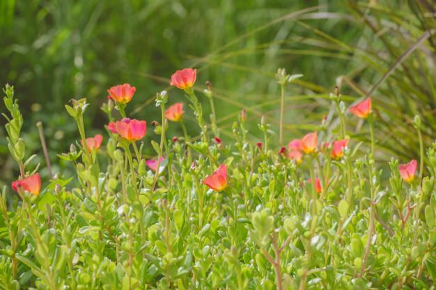 plants-dandelions-forest-flowers_36835-1184.jpg