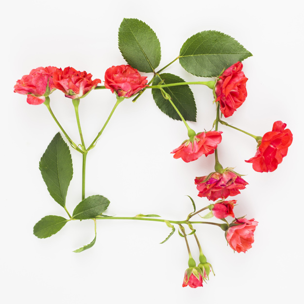 red-roses-frame-on-white-backdrop_23-2147893953.jpg