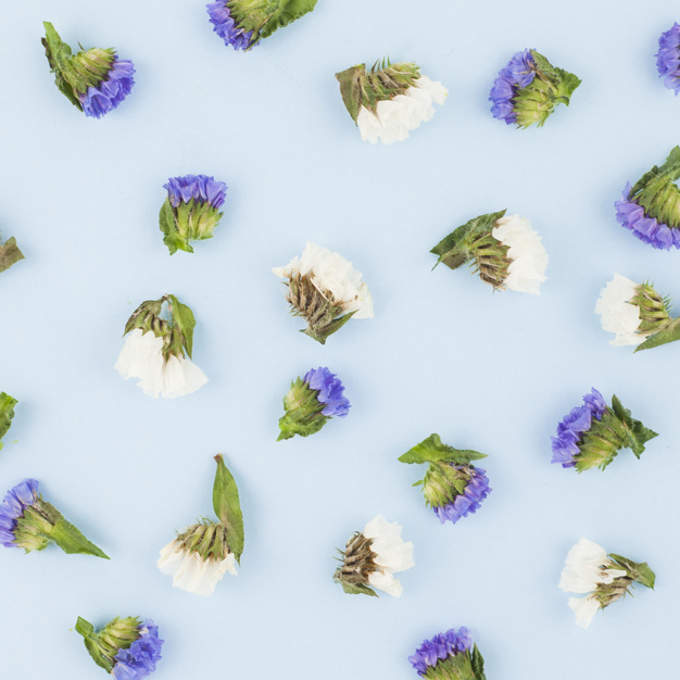 seamless-white-and-purple-flowers-on-blue-background_23-2147893956.jpg