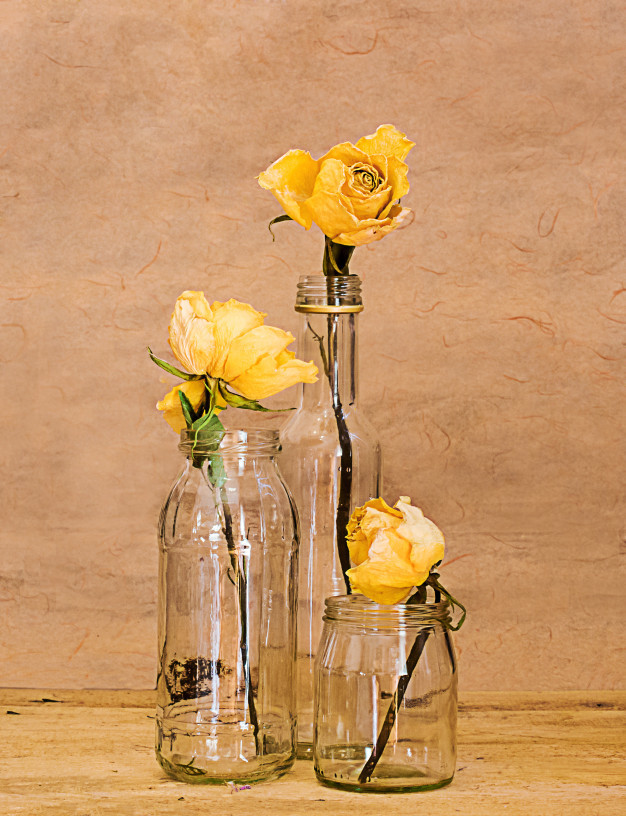 three-yellow-roses_61792-1126.jpg