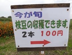 今が旬 枝豆の収穫できます。2本100円