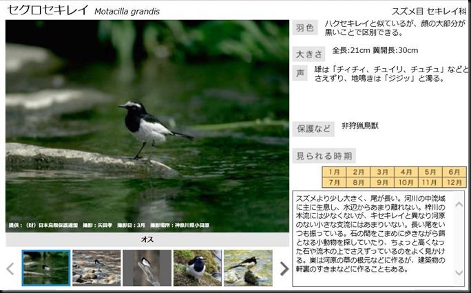 konashidaira201810-鳥類01