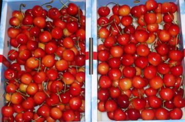 cherry2l.jpg