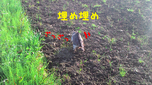 201604171452084f0.png