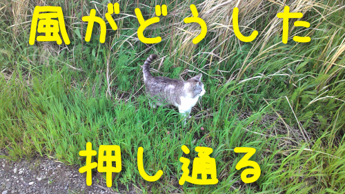 20160418200253ce2.png