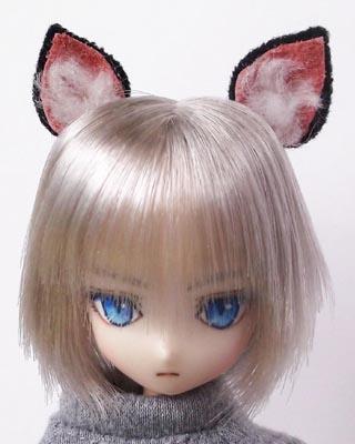 21ヘッドシャム猫ボーイa
