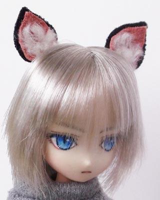 21ヘッドシャム猫ボーイb