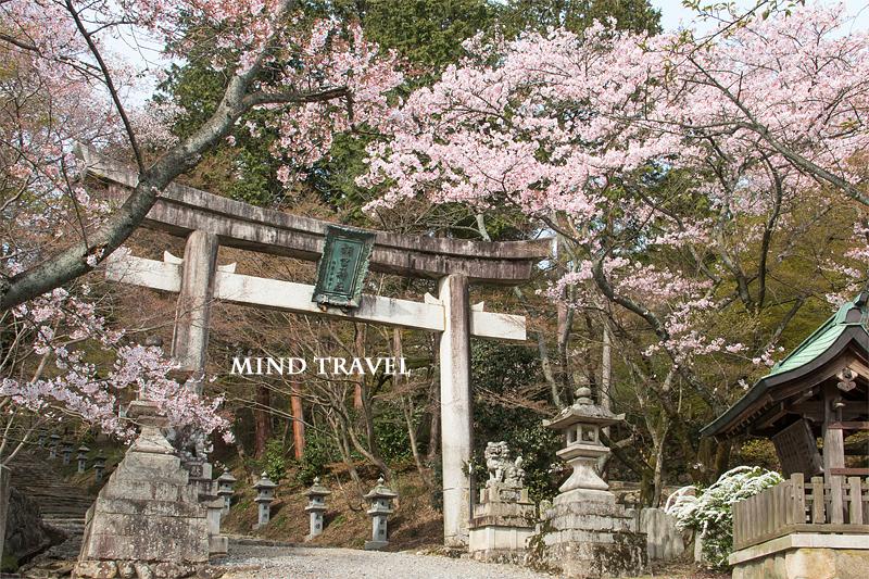 胡宮神社 鳥居 桜