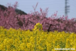 桃の花まつり12