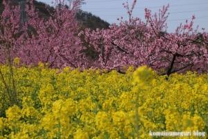 桃の花まつり13