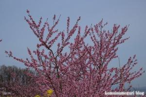 桃の花まつり14