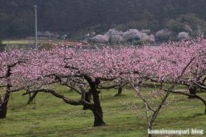 桃の花まつり16