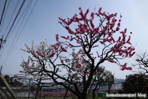 桃の花まつり19