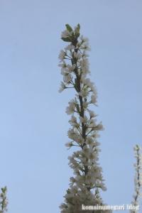 桃の花まつり10