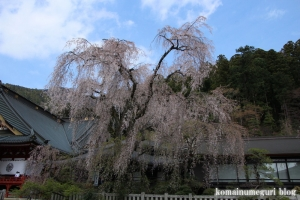 身延山久遠寺10