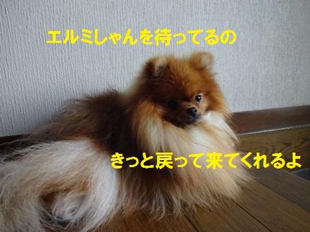 2016060313460251f.jpg