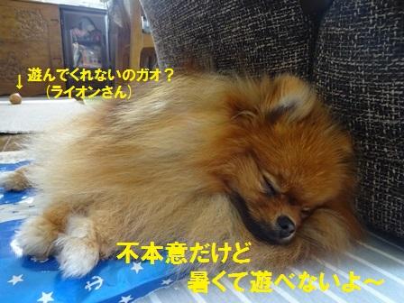 20160704085049ae3.jpg