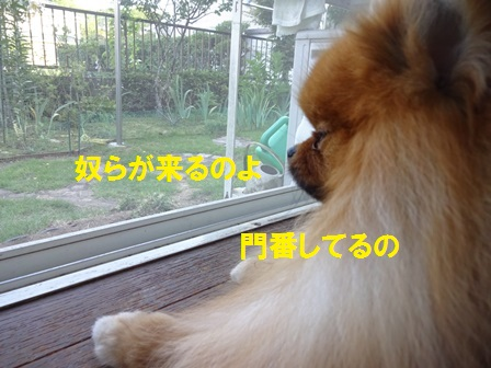 2016071814384565a.jpg