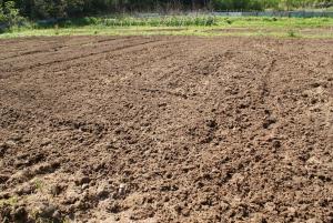 160426トマトの南圃場1