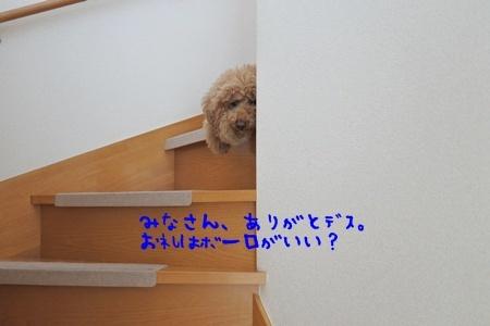 DSC_8405.jpg