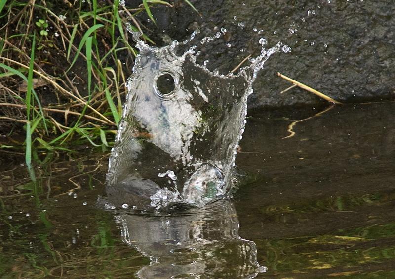 みず浴び (1)