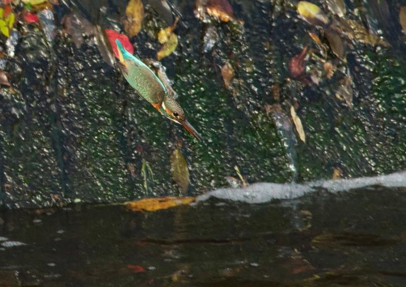 小さな魚 (1)