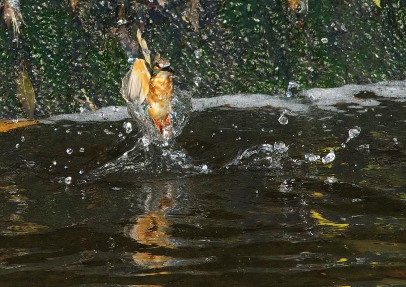 小さな魚 (4)