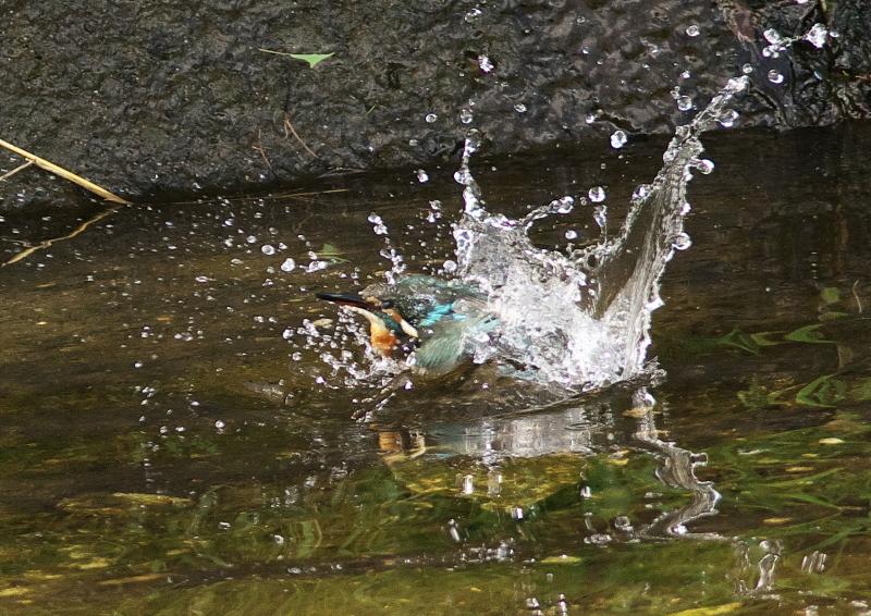 水浴び (1)