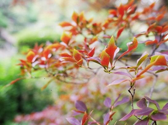 旧古河庭園日本庭園4