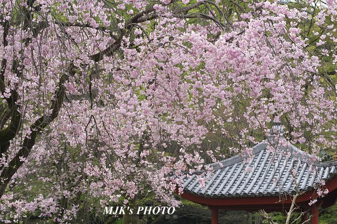 gifukouen6127.jpg